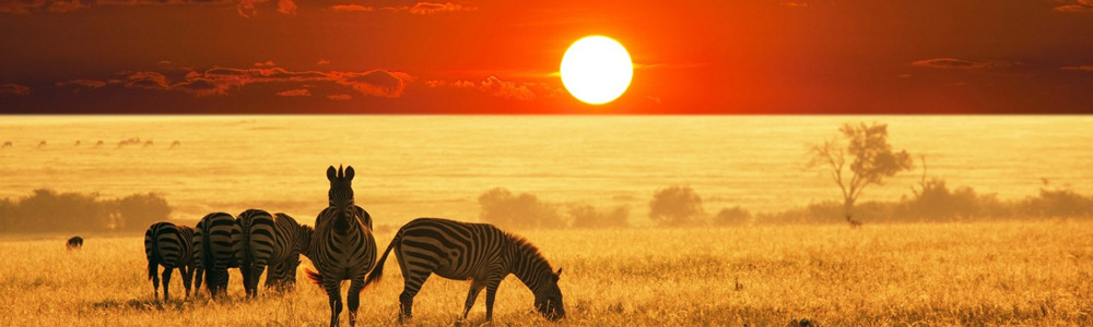 African-Safarif